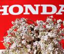 """Honda: """"Dit jaar geen updates meer voor Red Bull en AlphaTauri"""""""